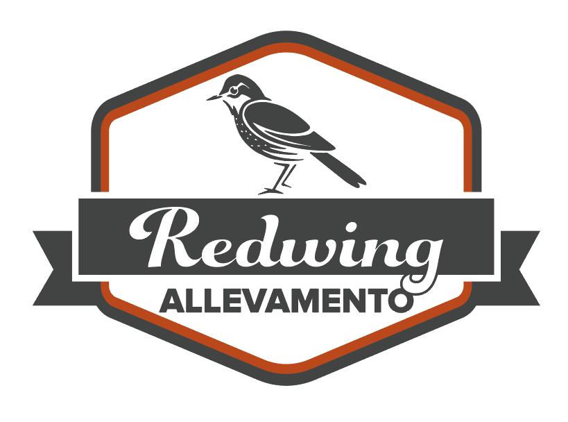 Allevamento Redwing